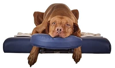 salt therapy for dogs and cats